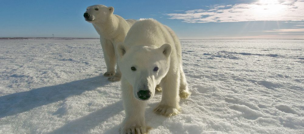Talking climate solutions with polar bears international